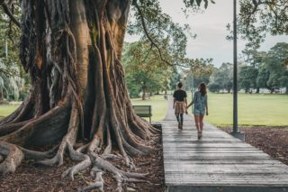 People walking by a tree in a park